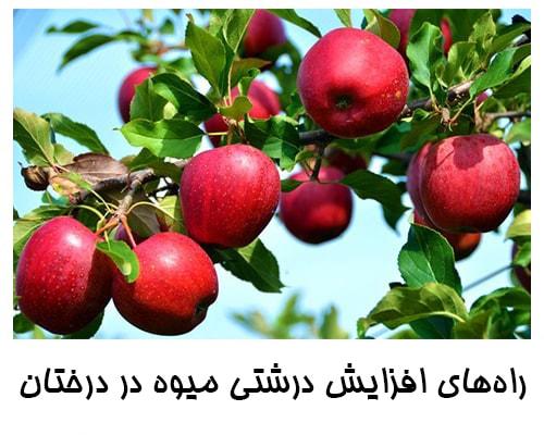 درشتی میوه