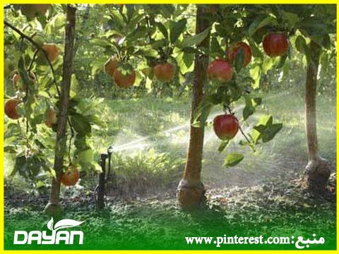 فواصل آبیاری سیب ، گلابی و به در بهار و تابستان